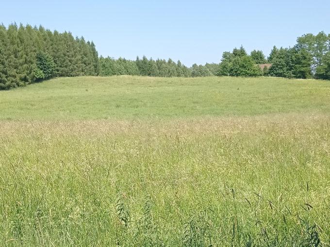 Róznowo gm. Dywity - działki rolne